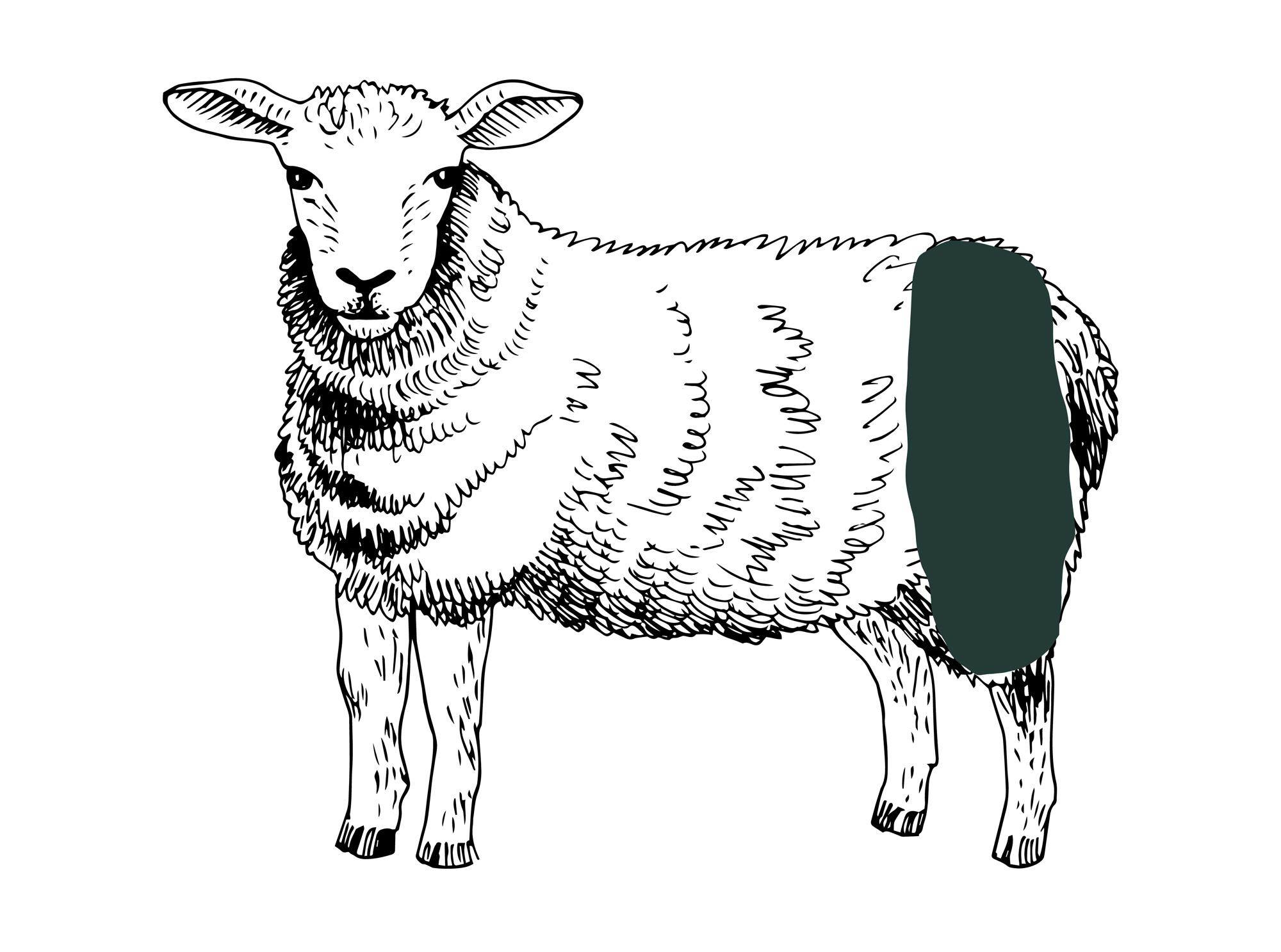Lammkeule online bestellen