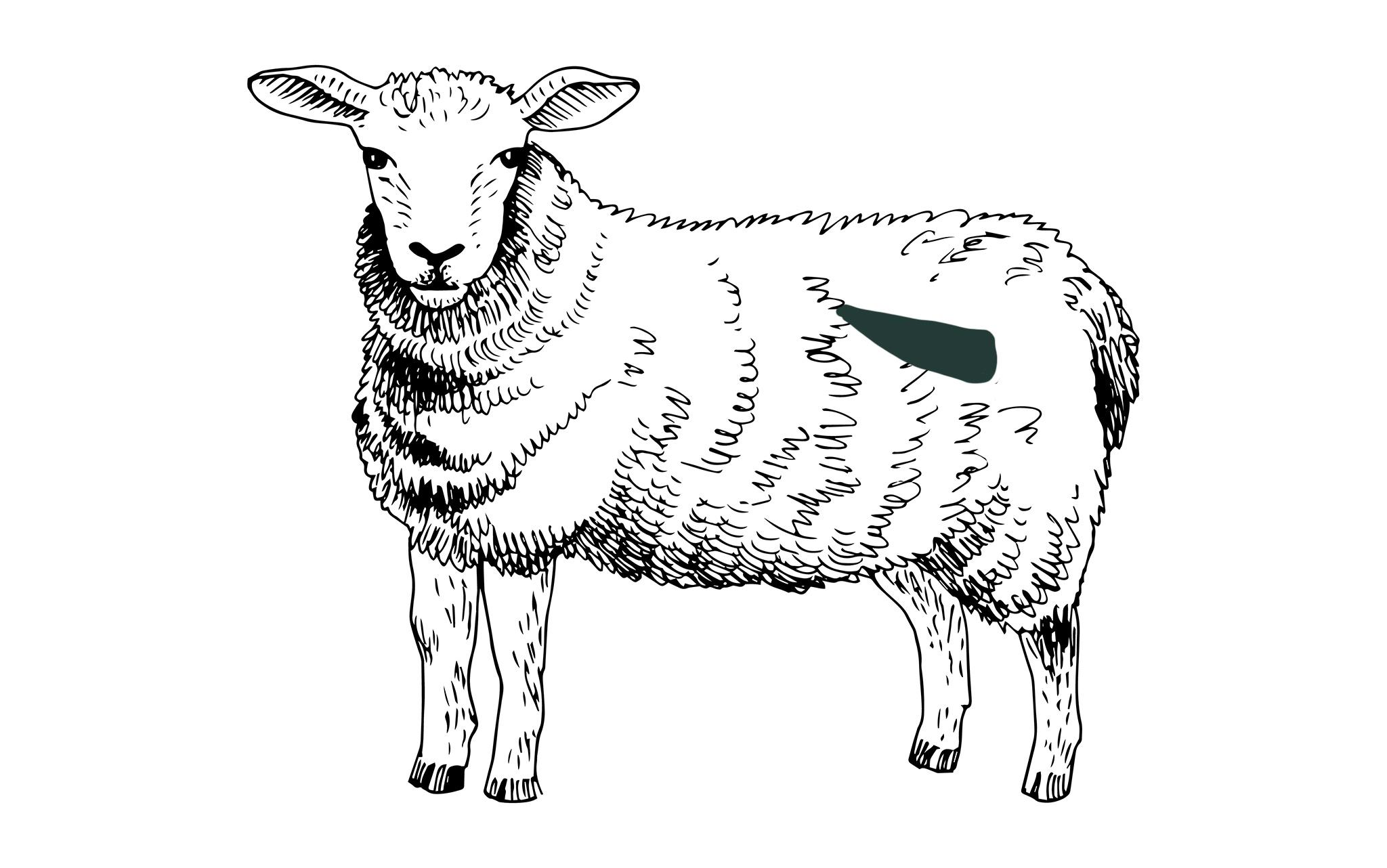 Lammfilet online bestellen