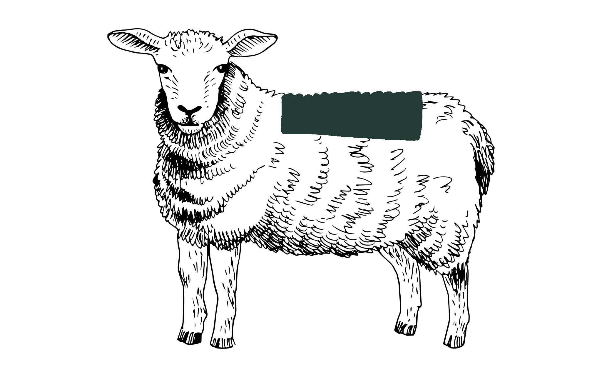 Lammkotelett online bestellen