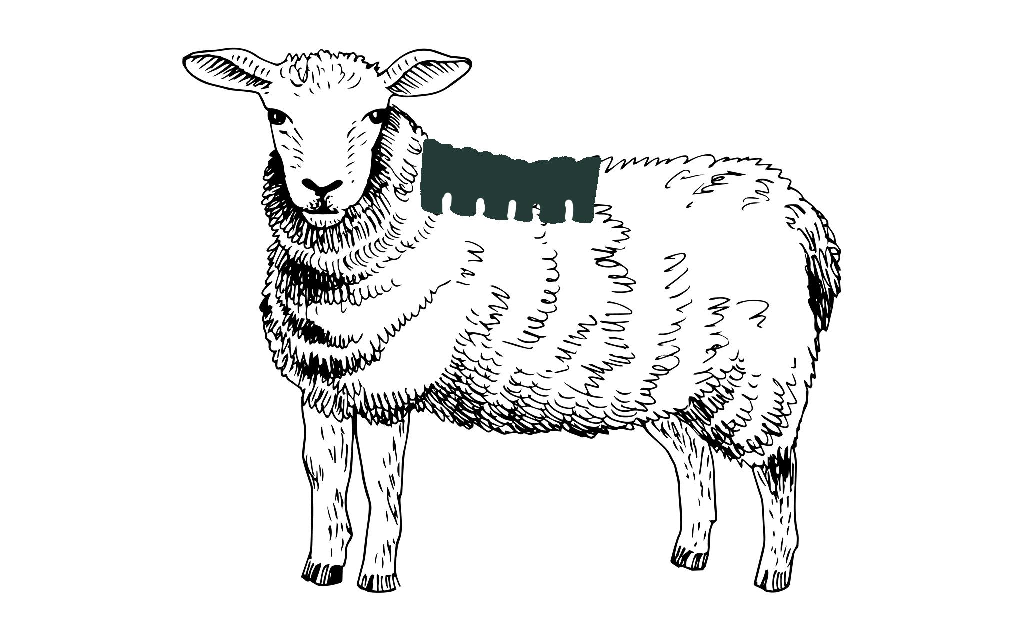 Lammnacken online bestellen